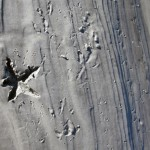 Sea Star Gull Traces: Sapelo Island
