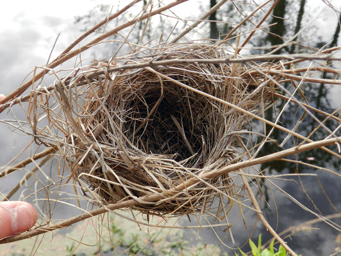 types of birds nests