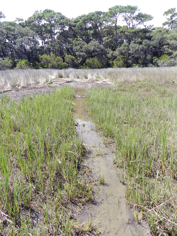 Alligator-Trail-Salt-Marsh-SCI
