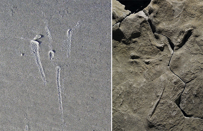 Modern-Fossil-Bird-Flight-Tracks