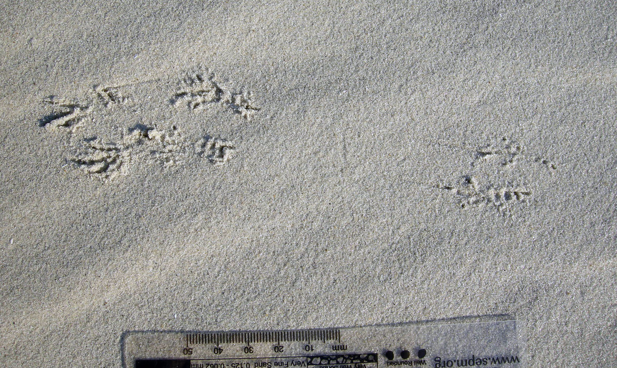 Sparrow-Flying-Tracks