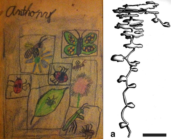 Insects-Then-Now