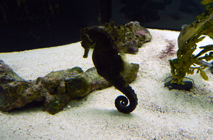 Seahorse-Making-Resting-Trace
